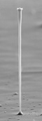 200 micron high pillar fabricated by electrochemical etching